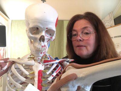 knäled skelett leder
